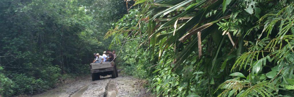 The road into the jungle